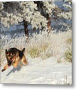 Winter Fun ... Montana Art Photo Metal Print