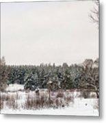 Winter Glade Under Snow. Metal Print