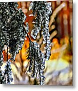 Winter Glow Metal Print