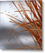 Winter Grass - 2 Metal Print