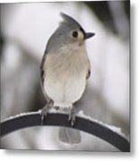 Winter Gray - Bird Metal Print