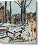 Winter Grazing  Metal Print by Charlotte Blanchard