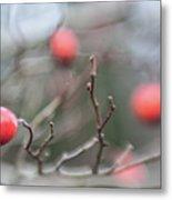 Winter Hawthorn Metal Print