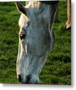 Winter Horse 4 Metal Print