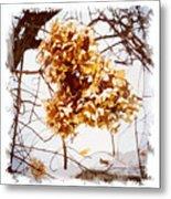 Winter Hydrangea Metal Print