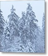 Winter In Maine 2017 Metal Print