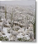 Winter In The Desert Metal Print by Sandra Bronstein