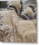 Winter In The Garden #1 Metal Print