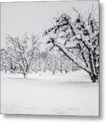 Winter In The Orchard Metal Print