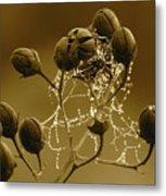Winter Jewels Metal Print