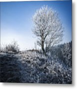 Winter Landscape Of Trees Covered With Frost Metal Print