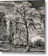 Winter Marches On Polaroid Metal Print
