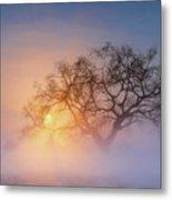 Winter Morning Metal Print