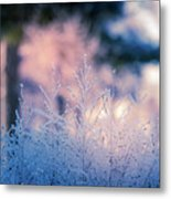 Winter Morning Light Metal Print