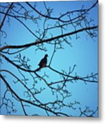 Winter Mourning Metal Print