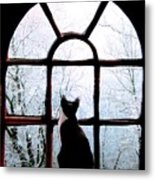 Winter Musing Metal Print