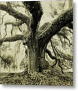 Winter Oak Metal Print