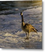 Winter On The River Metal Print