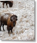 Winter Pasture Metal Print