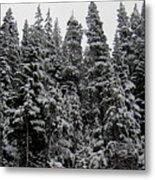 Winter Pine Spires Metal Print