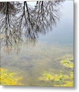 Winter Pond Reflections Metal Print