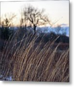 Winter Prairie Grass At Dusk Metal Print