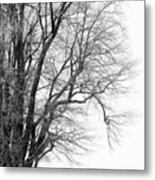 Winter Red And White  Metal Print