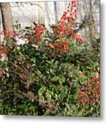 Winter Red Berries Metal Print