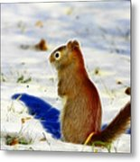 Winter Red Metal Print