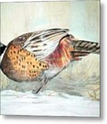 Winter Ringneck Metal Print