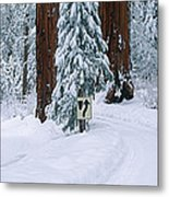 Winter Road Into Sequoia National Park Metal Print
