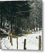 Winter Rural Pathway Metal Print