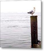 Winter Seagull On Long Beach Island Metal Print