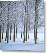 Winter Sentinels Metal Print