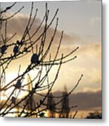 Winter Sun 3 Metal Print