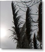 Winter Sun Metal Print