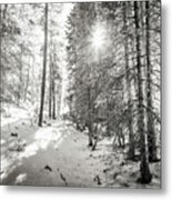 Winter Sunshine Forest Shades Of Gray Metal Print