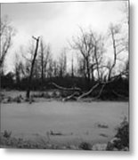 Winter Swamp Metal Print