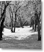 Winter Swing Metal Print