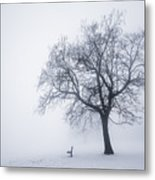 Winter Tree And Bench In Fog Metal Print