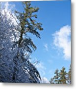Winter Tree And Sky Metal Print