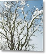 Winter Tree At Berry Summit Metal Print