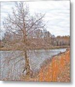 Winter Tree On Pond Shore Metal Print