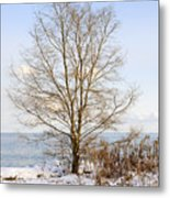 Winter Tree On Shore Metal Print