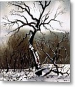 Winter Tree Stainland Metal Print
