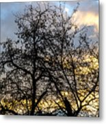 Winter Trees At Sunset Metal Print