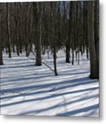 Winter Trees In Snow With Shadow Lines Metal Print