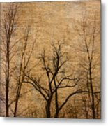 Winter Trees In The Bottomlands 2 Metal Print