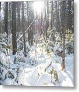 Winter Under The Sun Metal Print