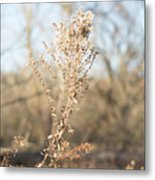 Winter Weeds Metal Print